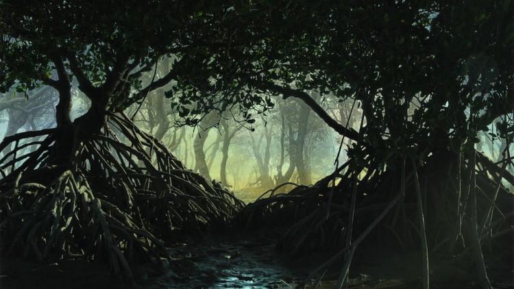 Mangroove PLAN 2 Cropped